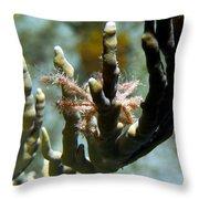 Neck Crab - Macro Undersea Reef Life Throw Pillow