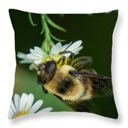 Nectar Collecting Drone Fly  Throw Pillow