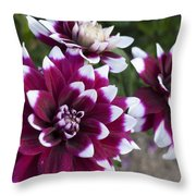 Neighbors Garden Treasures Throw Pillow