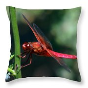 Neon Skimmer Throw Pillow