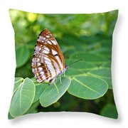 Neptis Hylas / Common Sailer Butterfly Throw Pillow