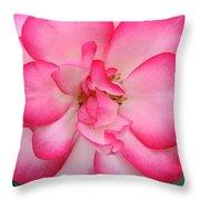 Neptune Hybrid Tea Rose Throw Pillow