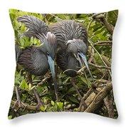 Nest Building Throw Pillow