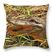 Nesting Alligator Throw Pillow