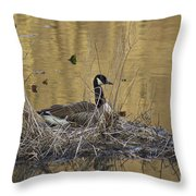 Nesting Canada Goose - Branta Canadensis Throw Pillow