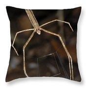 Net-casting Spider Throw Pillow