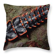Net-winged Beetle  Borneo Throw Pillow