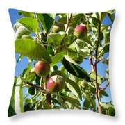 New Apples Throw Pillow