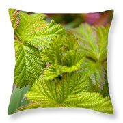 New Black Berry Leaves Throw Pillow