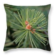 New Blue Spruce Buds Throw Pillow