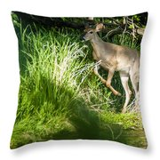 New Buck Throw Pillow