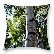 New England Birch Throw Pillow