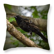 Red Winged Blackbird - New Heights - 06.04.2014 Throw Pillow