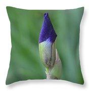 New Life Cycle Iris Bud Throw Pillow