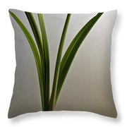 An Emerging Amaryllis Throw Pillow