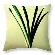 Fanned Leaves Of An Amaryllis Throw Pillow