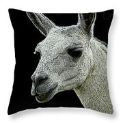 New Photographic Art Print For Sale   Portrait Of  Llama Against Black Throw Pillow