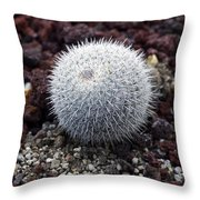 New Photographic Art Print For Sale White Ball Cactus Throw Pillow