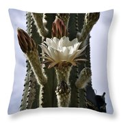 New Photographic Art Print For Sale White Cactus Flower Throw Pillow