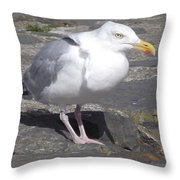 New Quay Gull 1 Throw Pillow