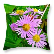 New York Asters In Flower's Cove-newfoundland Throw Pillow