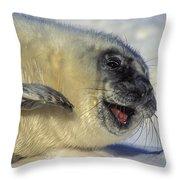 Newborn Gray Seal Pup Halichoerus Throw Pillow