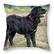 Newfoundland Dog, Standing In Field Throw Pillow