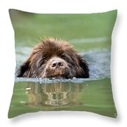 Newfoundland Dog, Swimming In River Throw Pillow