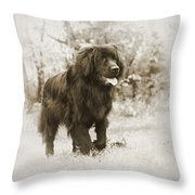 Newfoundland Friend Throw Pillow