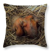 Newly Born Throw Pillow by Robyn King