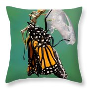 Newly-emerged Monarch Butterfly Throw Pillow