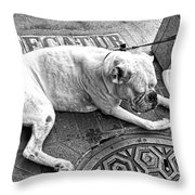 Newsworthy Dog In French Quarter Black And White Throw Pillow