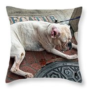Newsworthy Dog In French Quarter Throw Pillow