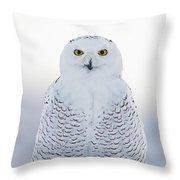 Nh Seacoast Snowy Owl  Throw Pillow