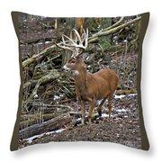 Nice Buck Throw Pillow