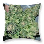 Nice One Throw Pillow