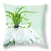 Nigella Damascena 'double White'  Throw Pillow