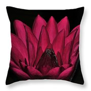 Night Blooming Lily 2 Of 2 Throw Pillow