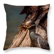Night Heron And Crawdaddy Throw Pillow