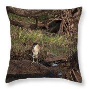 Night Heron At Corroboree Billabong Throw Pillow