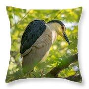 Night Heron At Rest Throw Pillow