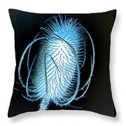 Night Teazle Throw Pillow