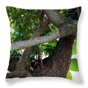 Nispero Tree Throw Pillow