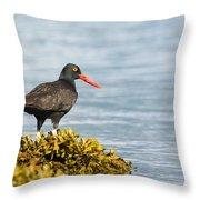 No Bird Is An Island Throw Pillow
