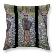 Curious Yearling Deer Throw Pillow