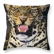 No Solicitors African Leopard Endangered Species Wildlife Rescue Throw Pillow