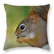 Nom Nom Squirrel  Throw Pillow