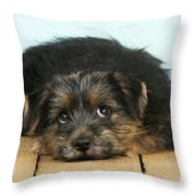 Norfolk Terrier Puppy Throw Pillow