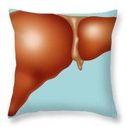 Normal Liver Throw Pillow