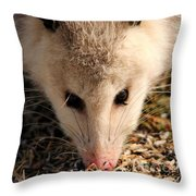 North American Opossum In Winter Throw Pillow
